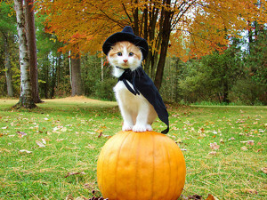 witch-cat